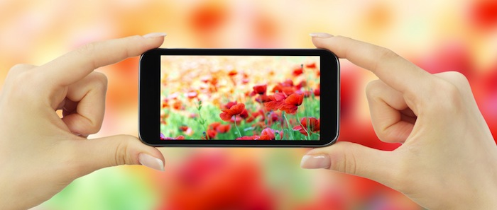 smartphone taking pic of flowers