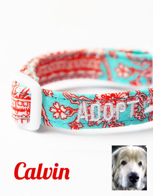 CharlieDog And Friends - Calvin Collar