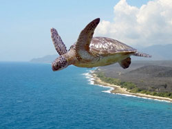 Flying-Turtle