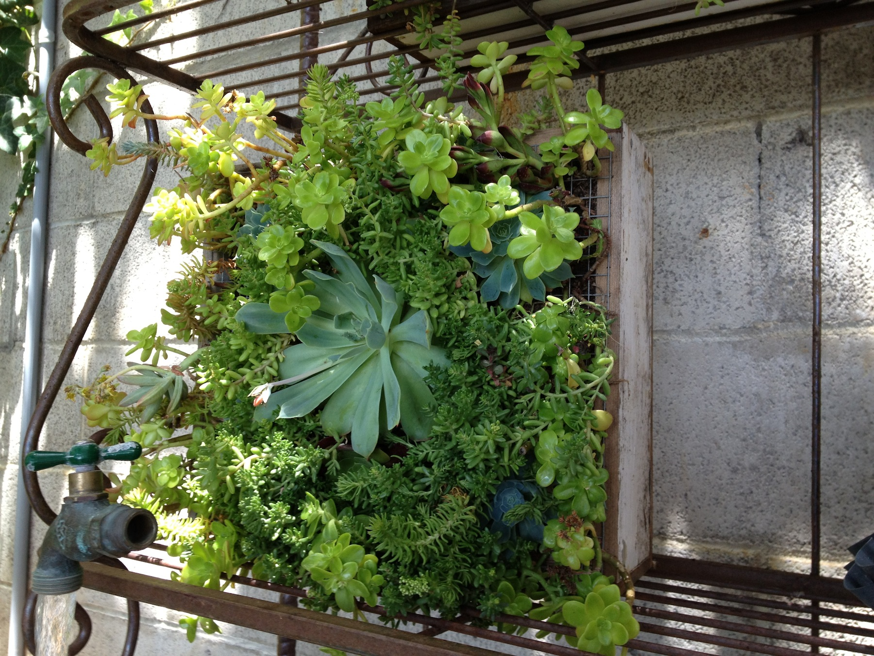 5 Easy Steps To Gardening For Apartment-Dwellers
