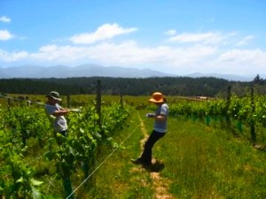 WWOOF, Travel for free, voluntourism, New Zealand