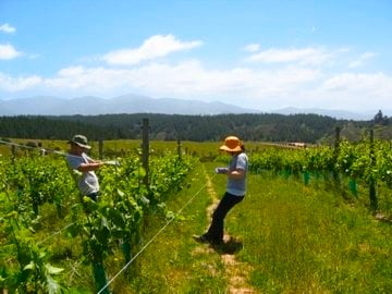Going Organic with WWOOF: Leaving a Sweat Trail through New