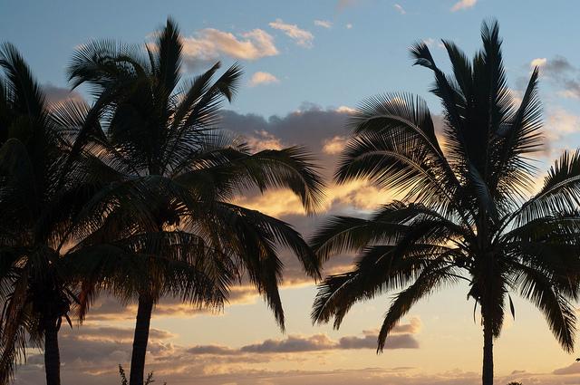 Palm_Tree_Sunset_1_big_mn