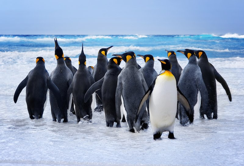 Penguins and difference