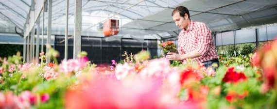 Tips for opening a flower shop