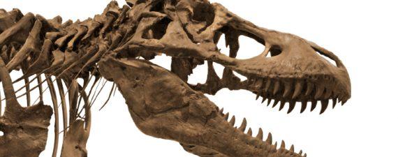 Jurassic Money: 5 Financial Dinosaurs to Avoid