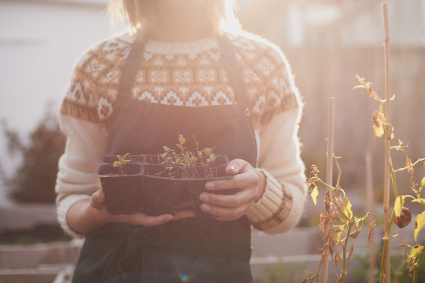 5 Investing Tips From Your Garden