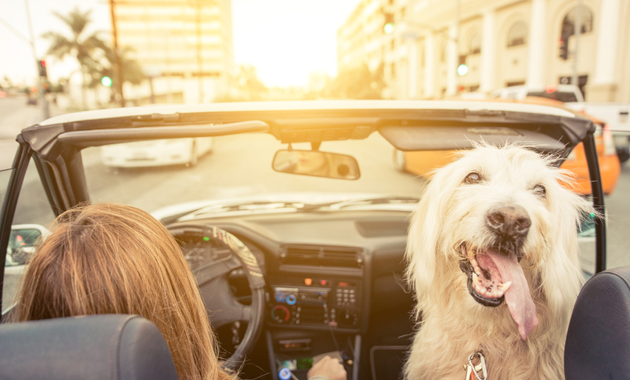 Best Cheap Car Insurance in California for 2018 - NerdWallet