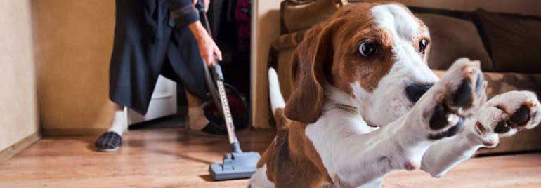 pet_vacuum_header_low2