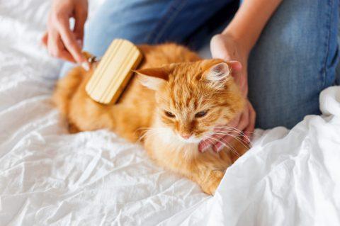 pet-grooming