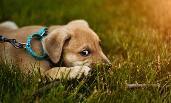 How much does owning a pet really cost nerdwallet can you put a dollar amount on how much you love your pet actually you can and should caitlin thornton solutioingenieria Choice Image
