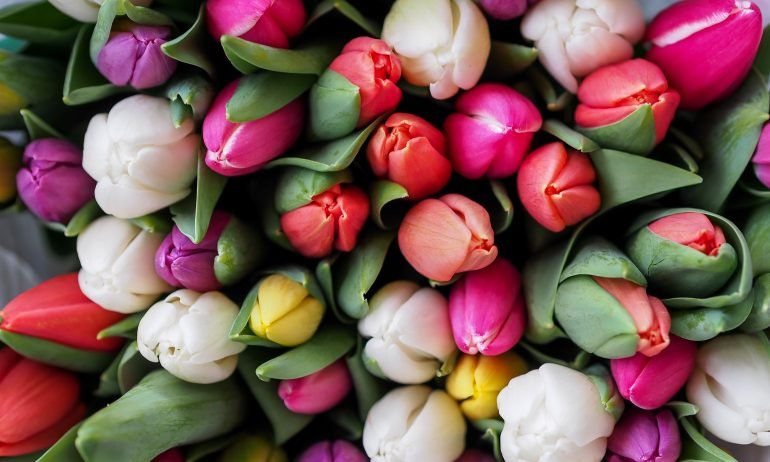 multicolored-bouquet-of-tulips