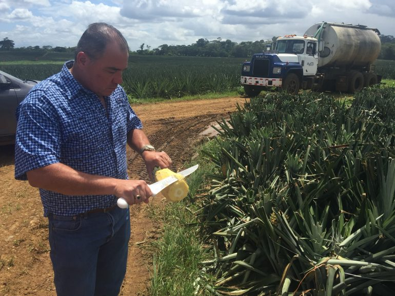 $6 Million in Bogus Organic Fruit Sold to U.S., Costa Rican Report Finds