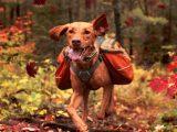dog-gear