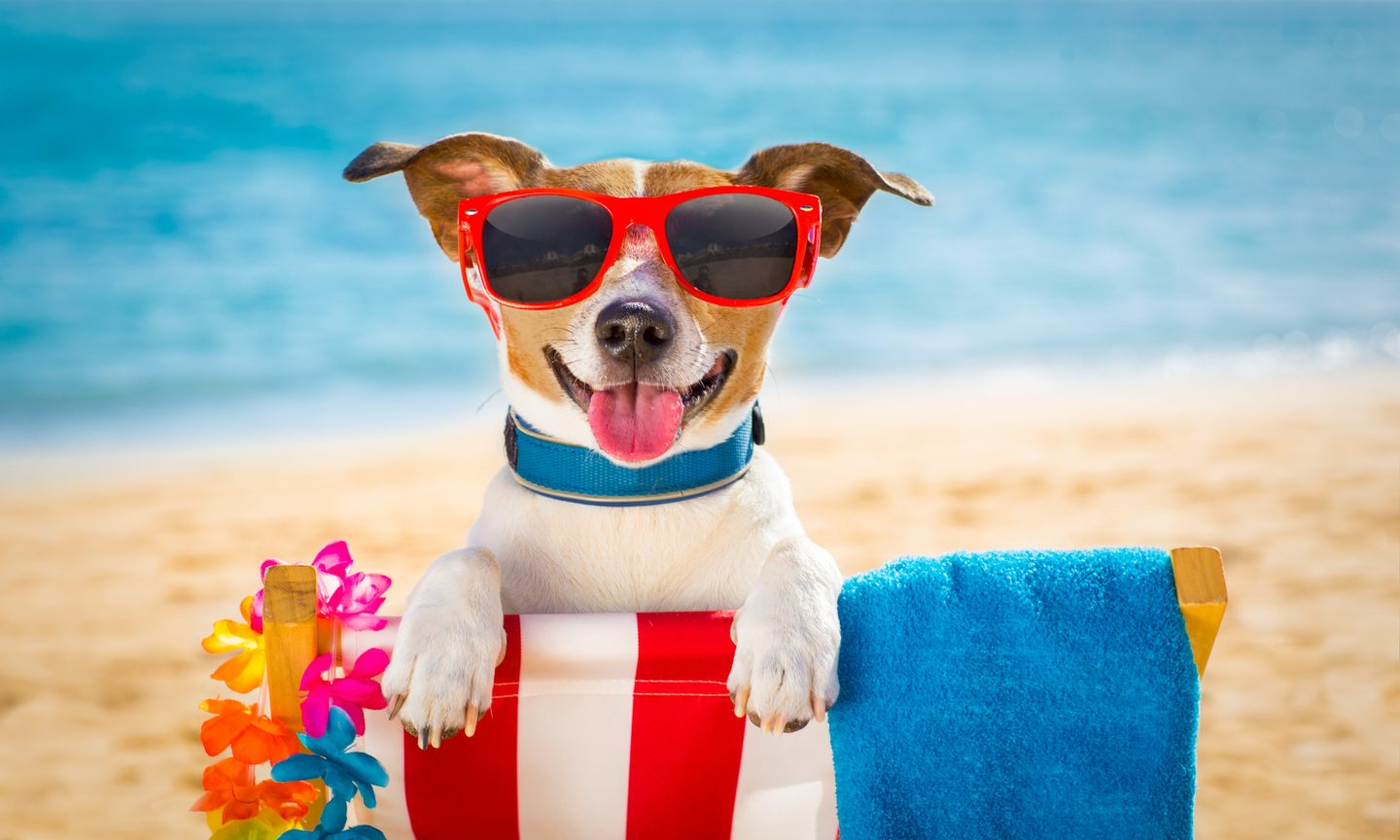 5 Ways to Save Energy During the Dog Days of Summer
