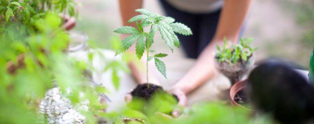 How to Buy Marijuana Stocks - NerdWallet