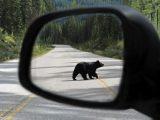 stock-market-outlook-bear-risk-behind-us
