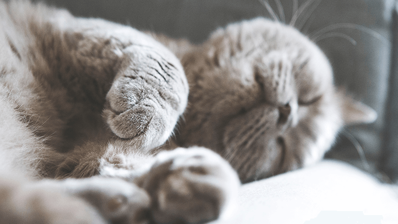 How to save money on cat and kitten insurance