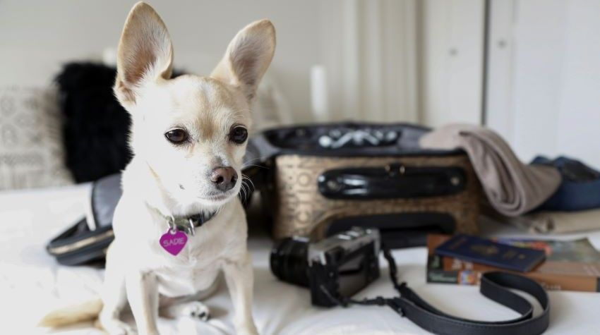 Travel With Your Pet: Animal Health Certificate Replaces Pet Passport